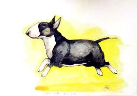 MINIATYRBULLTERRIER Konstkort A4 av Lisa Carlstedt  1 st 30:- eller 4 st 100:-